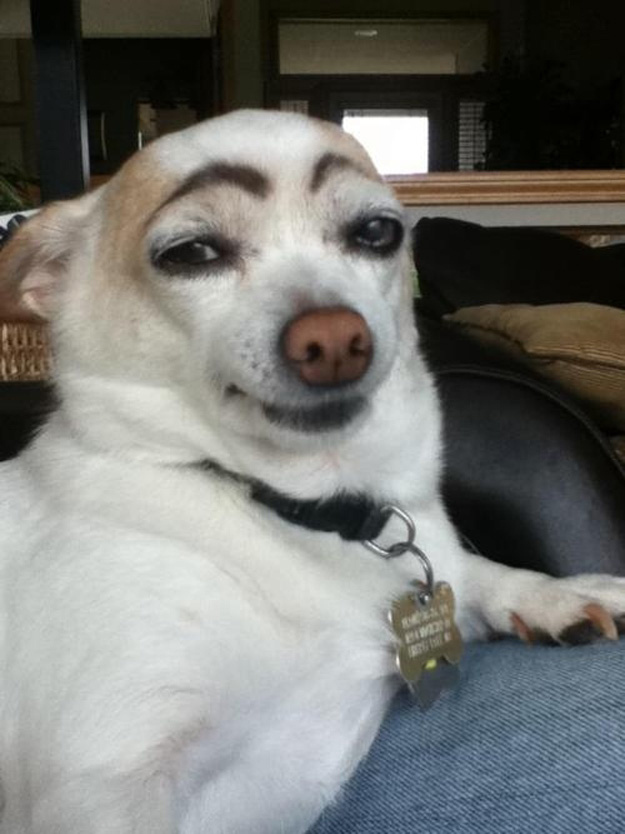 Eyebrow Dog