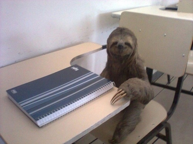 Sloth at Work
