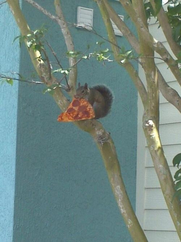 Squirel Pizza