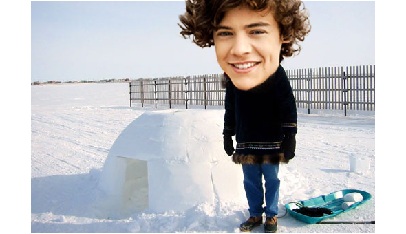 Harry-Igloo