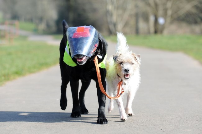Dog Guides Blind Dog