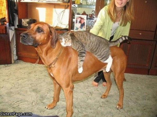cats-on-dogs-3