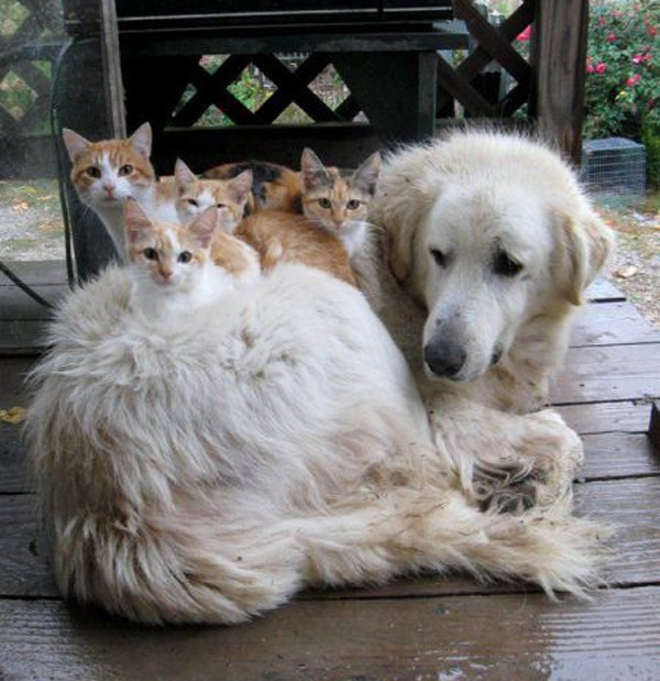 cats-on-dogs4
