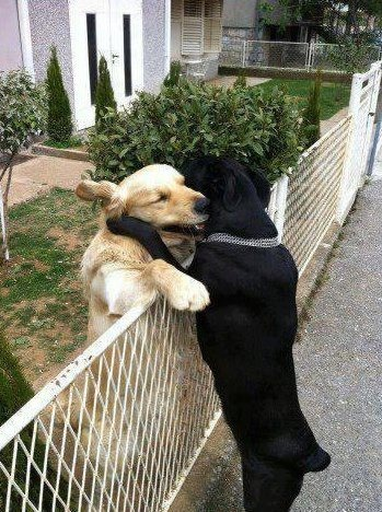 dogs-hugging