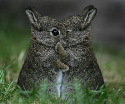 rabbits-hugging