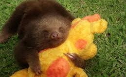 sloth-hugging