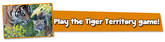 Tiger-Cubs-Button-2014-NEW