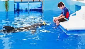 Dolphin-Tale-2-610x356