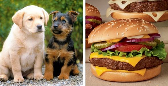 dog-burger