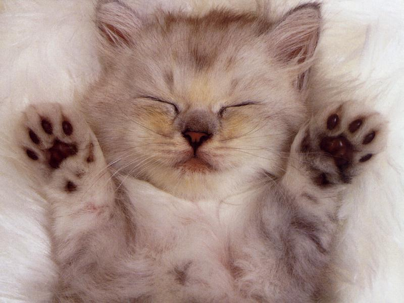 cute-kittens-20-great-pictures-1
