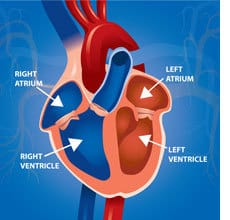 atrial-ventricle
