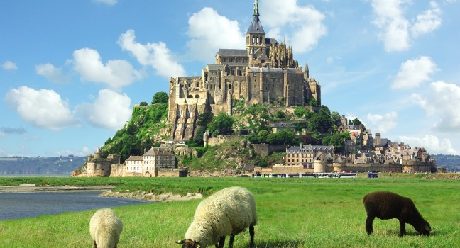 sheep-mont-saint-michel-normandy-france_main