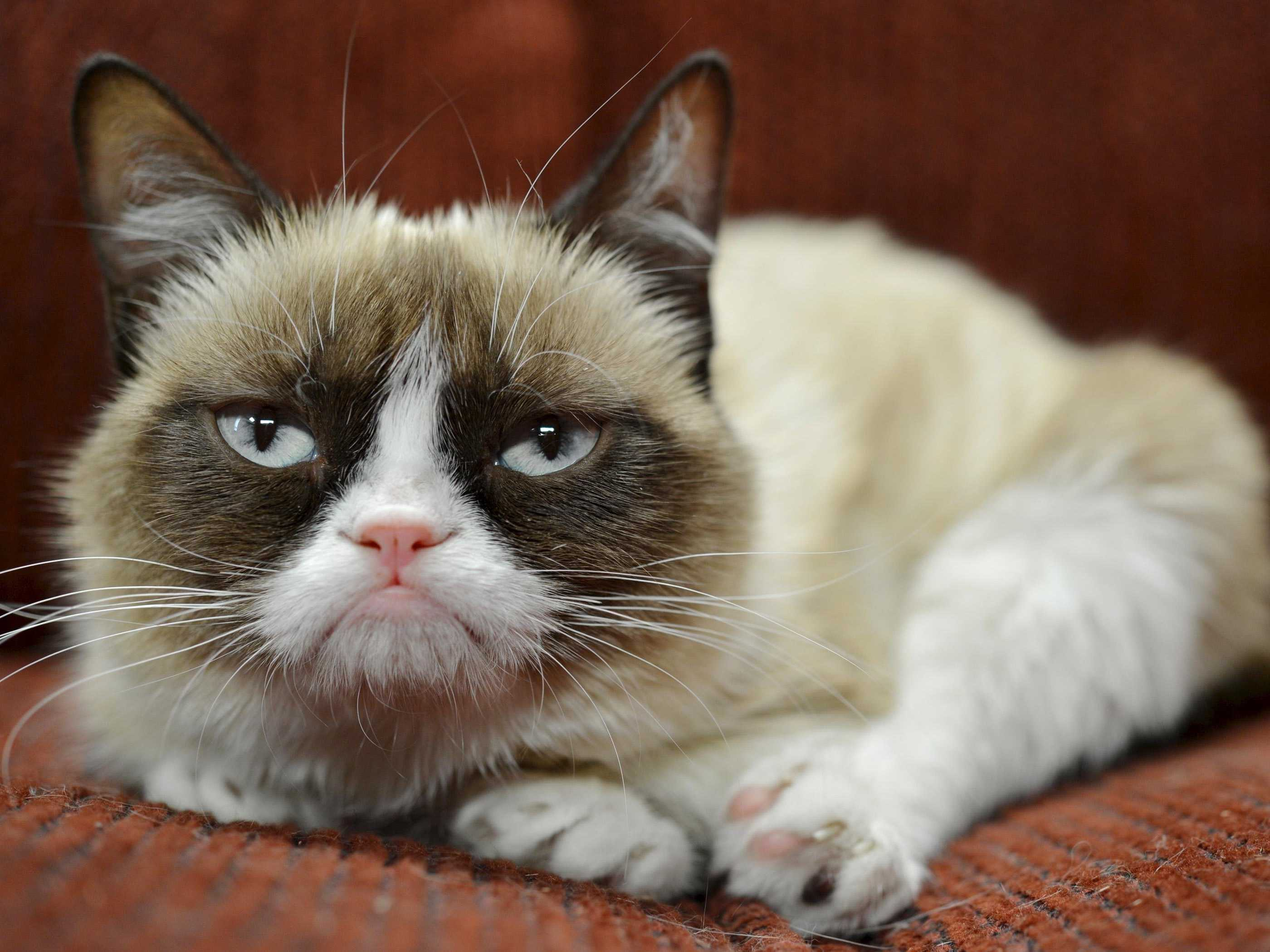 grumpy-cat-has-earned-her-owner-nearly-100-million-in-just-2-years
