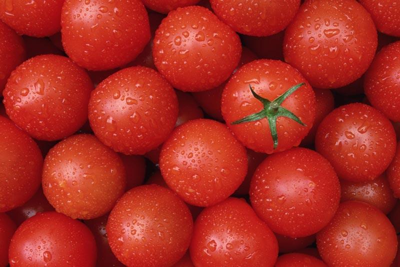 fresh-tomato-1063802