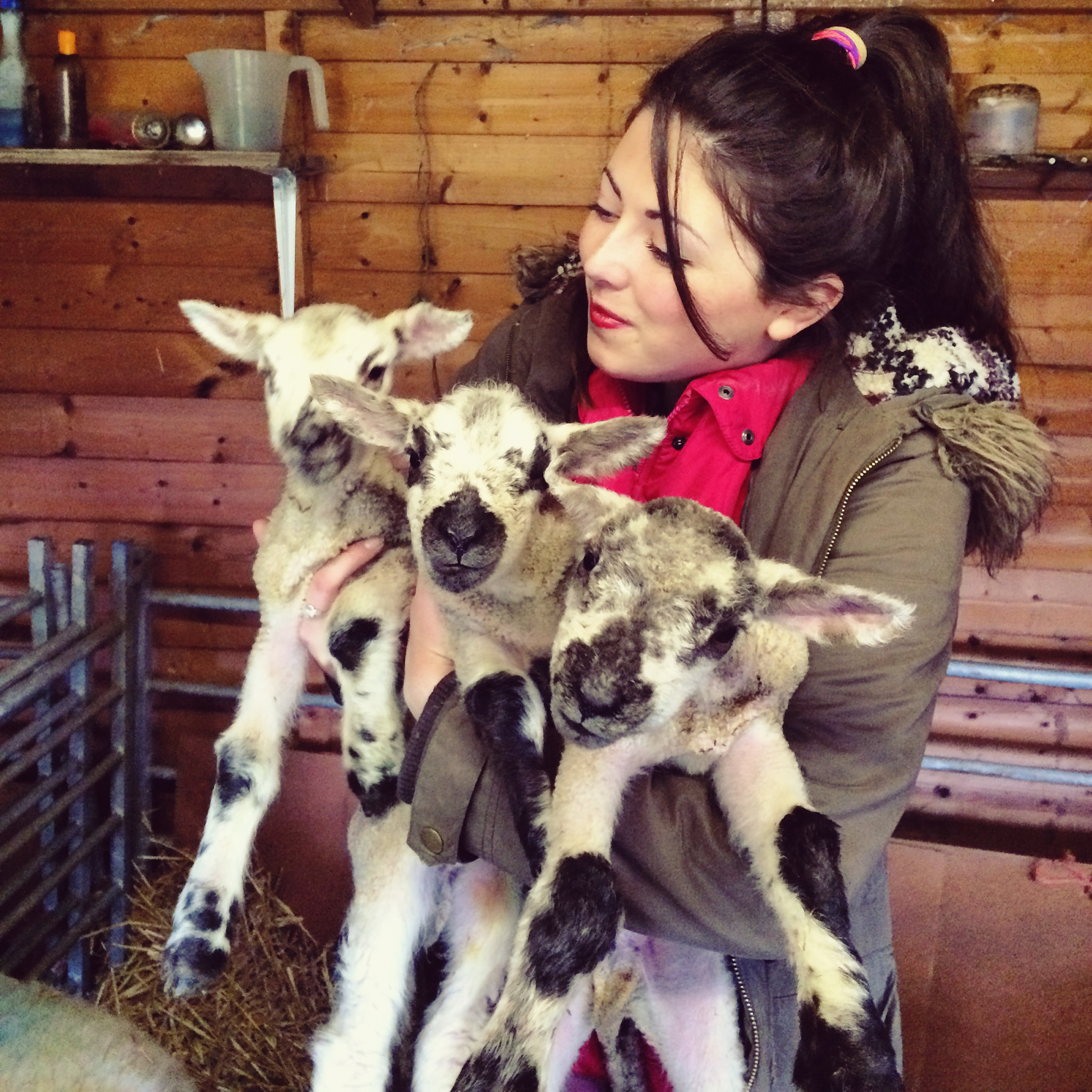 'Team photo'! We brought the triplets into our garden as they were weak and it was cold. I love having cuddles in the garden shed.