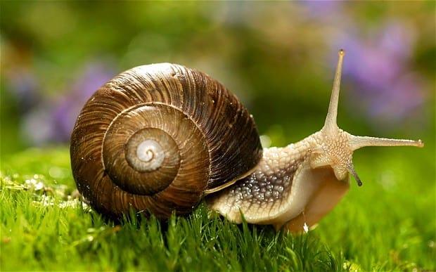 snail_2247464b