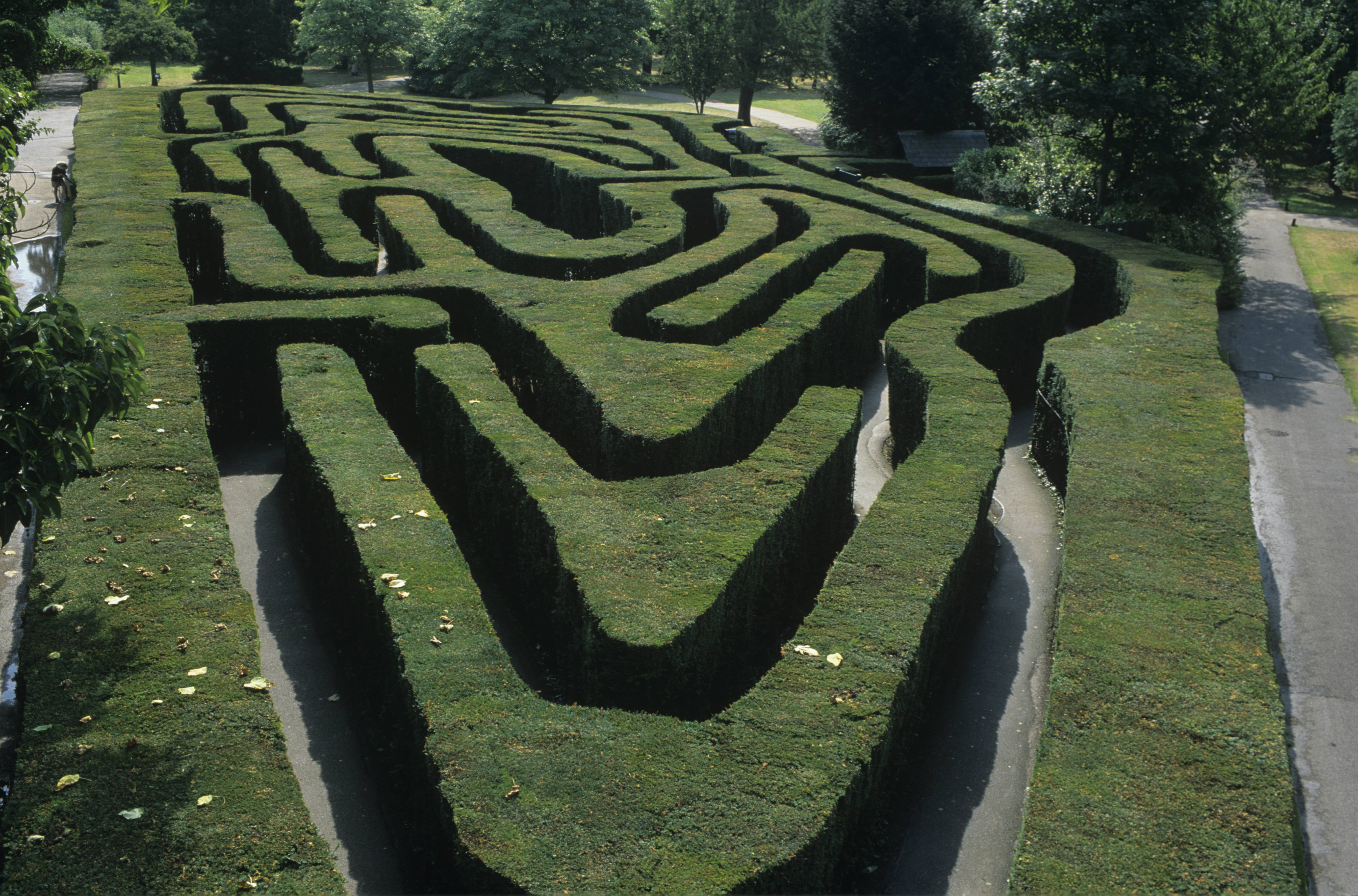 Hampton Court Palace,Photographer: Vivian Russell,The Maze, looking east