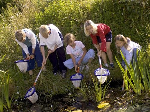 Children-pond-dipping