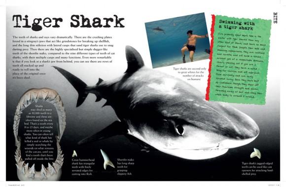 Predators-shark