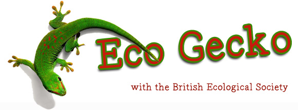 eco-gecko-banner