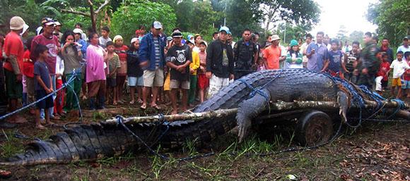 massive-croc1