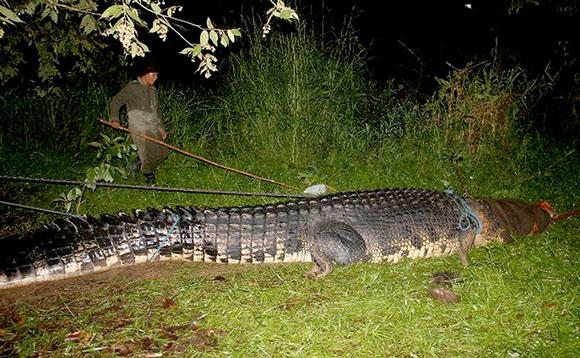 massive-croc2