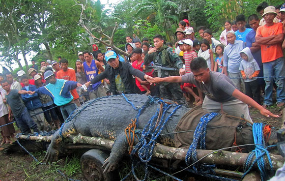 massive-croc4