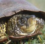 national-turtle