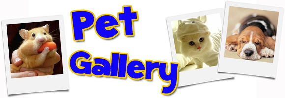 pet-gallery-header