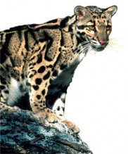 predators-image-2